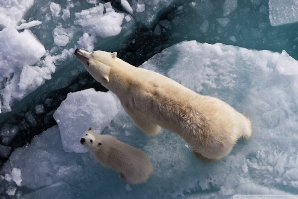 If you freeze enough, you might have some leftover for the poor polar bears!