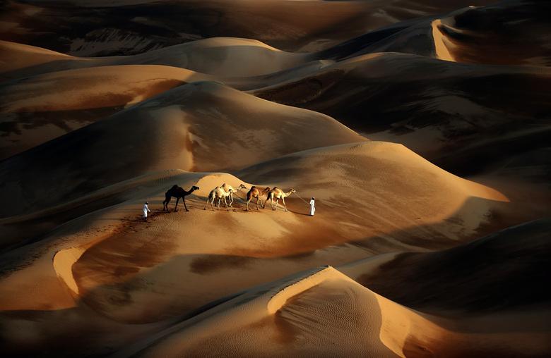 TOPSHOTS-UAE-CAMEL-DESERT-NATURE-TOURISM