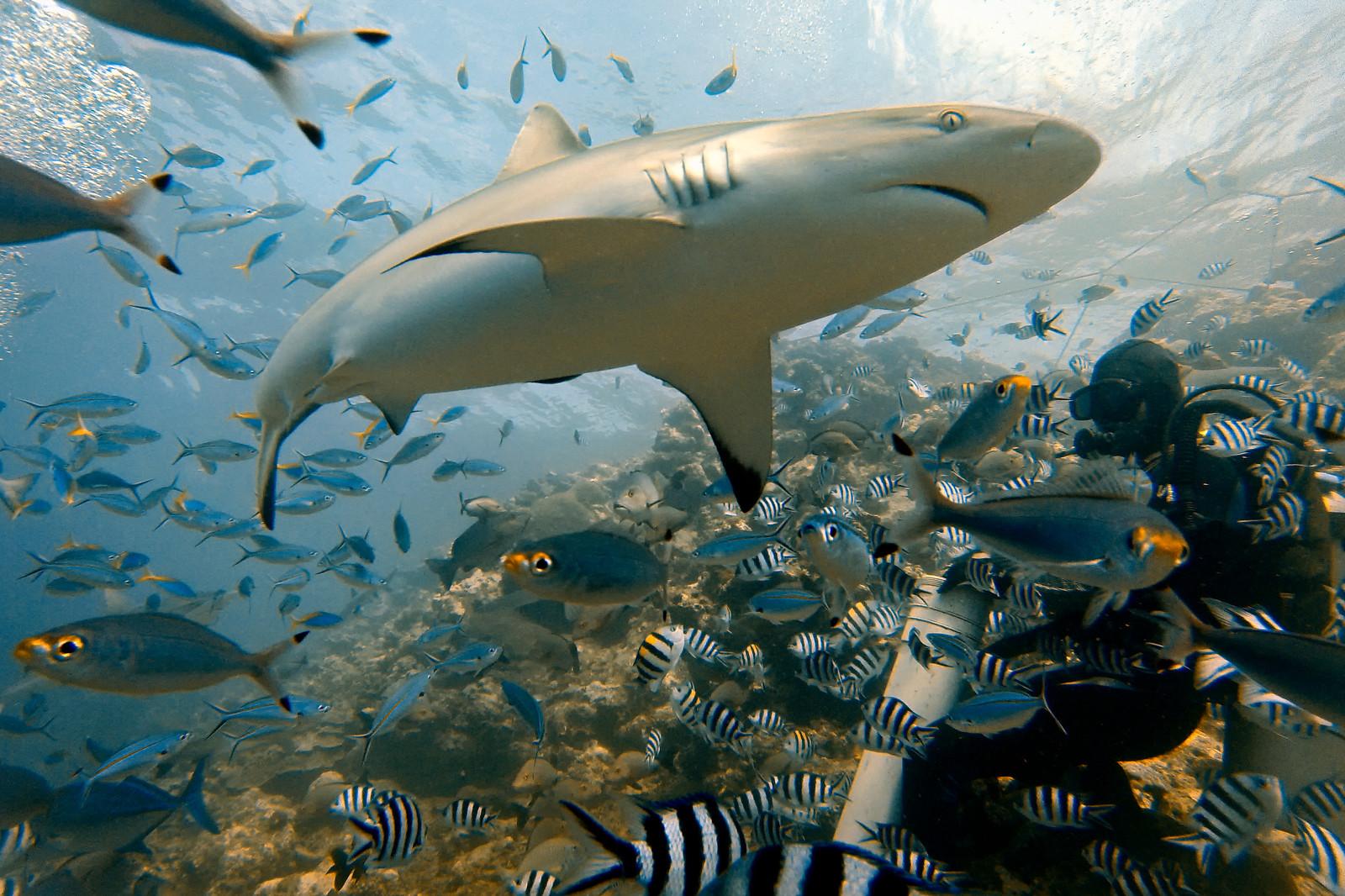 GoPro-shark-diving-beqa-XL