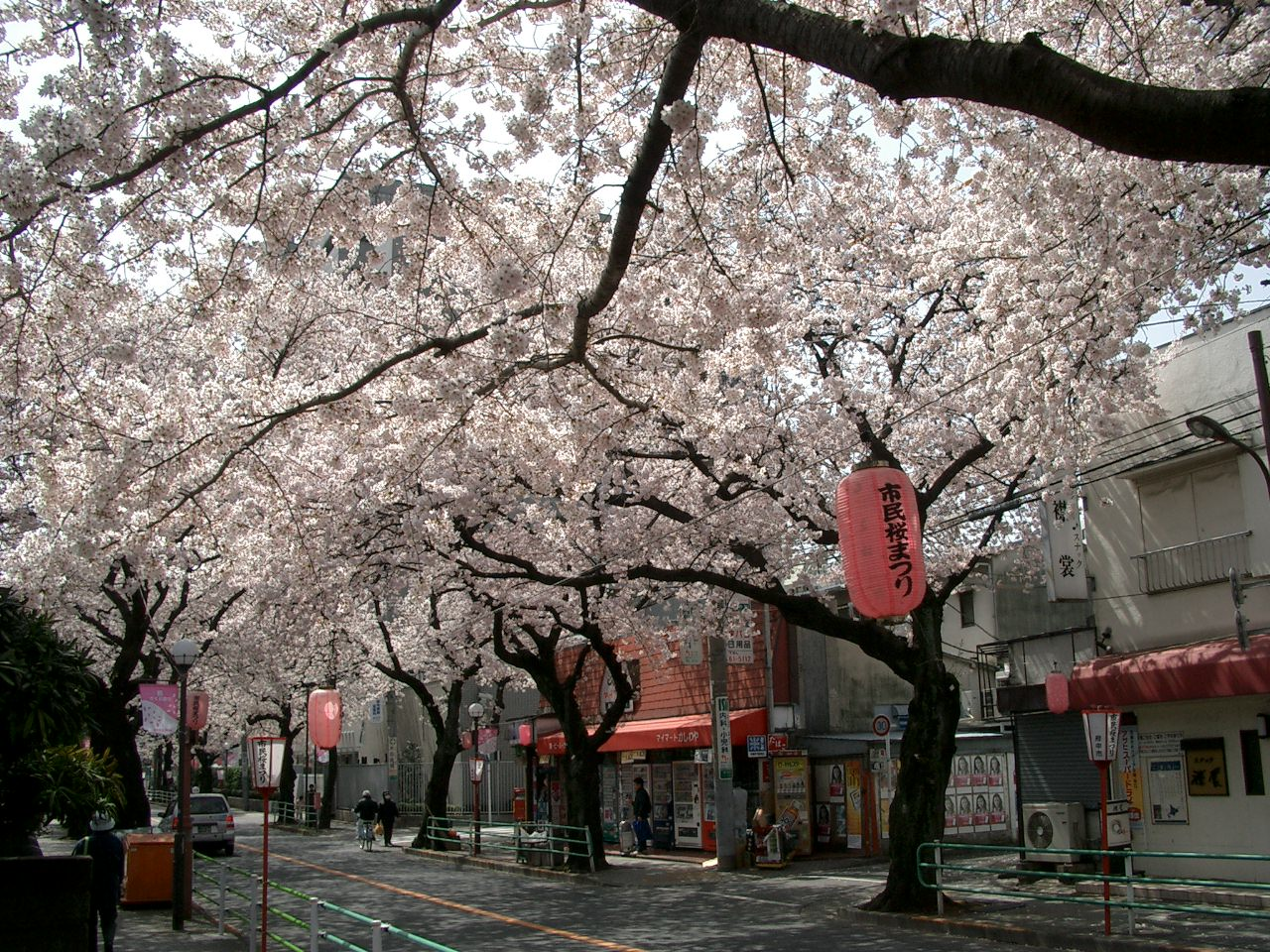 Fuchu-Koen-Dori_in_Fuchu_Tokyo_Japan
