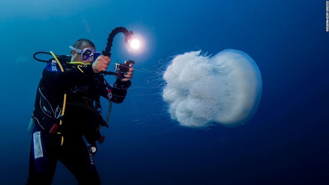 150827214629-suez-invasive-species-nomad-jellyfish-super-169