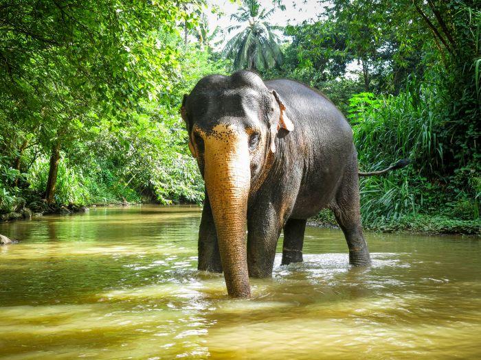 elephantfreedomproject