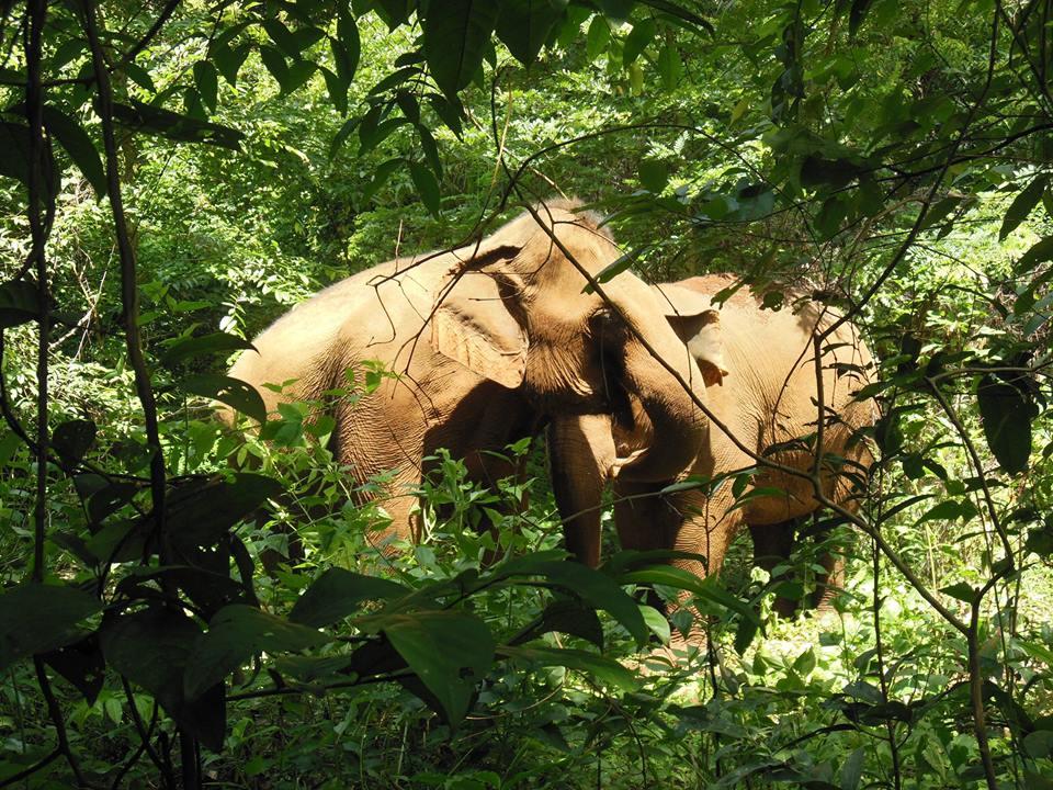 elephantvalley2