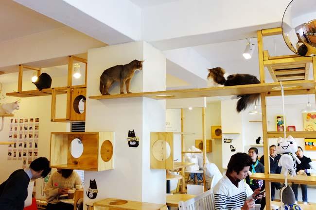 calico-cafe-tokyo