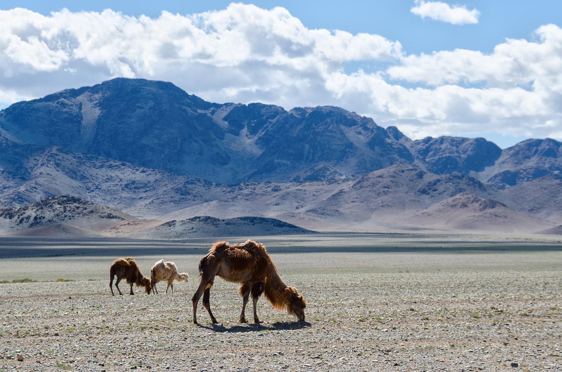 mongolia-1041538_1920