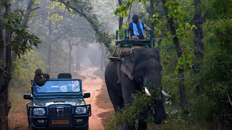 Elephant-Safari-at-Bandhavgarh