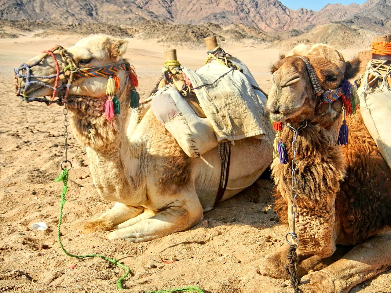 egypt-1002504_1280