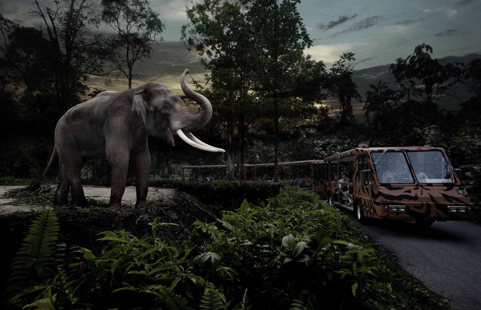 tram_safari_2