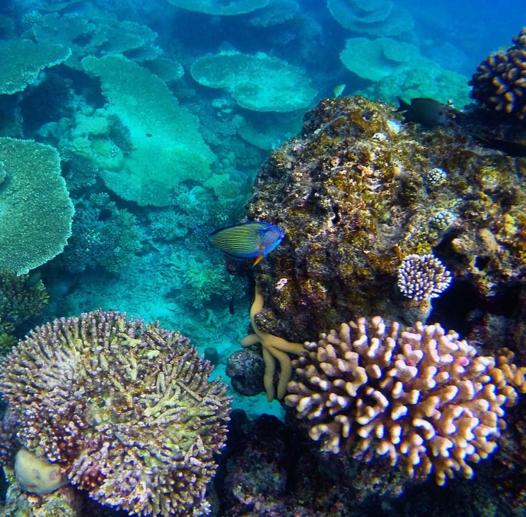 Baros_Maldives_Luxury_Resort_Paradise_House-Reef_Snorkel-1-1024x1008
