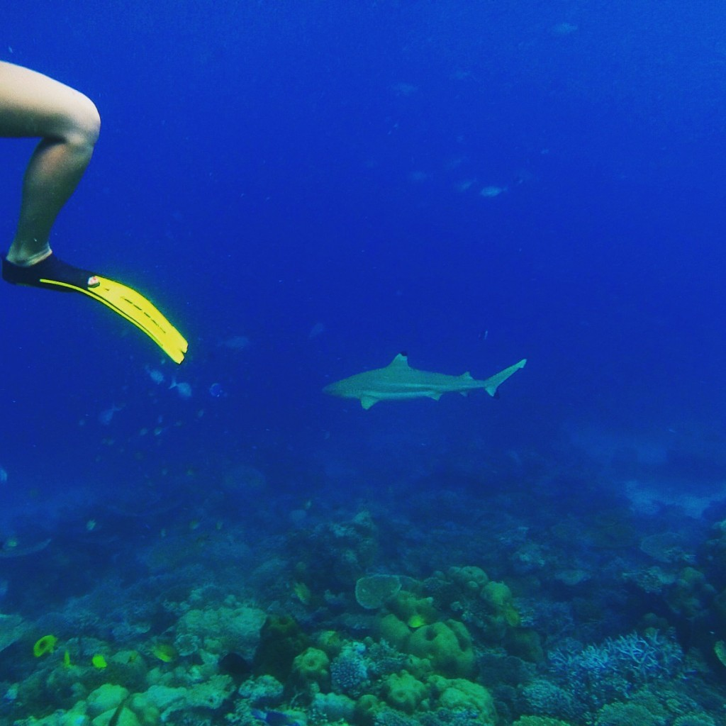 Baros_Maldives_Luxury_Resort_Paradise_House-Reef_Snorkel-3-1024x1024