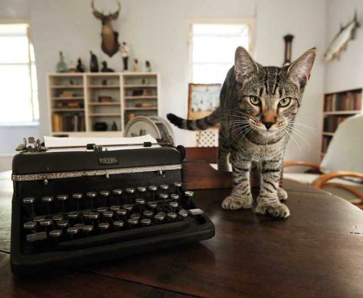 Cat-Pic-Hairy-Truman_731_600_100