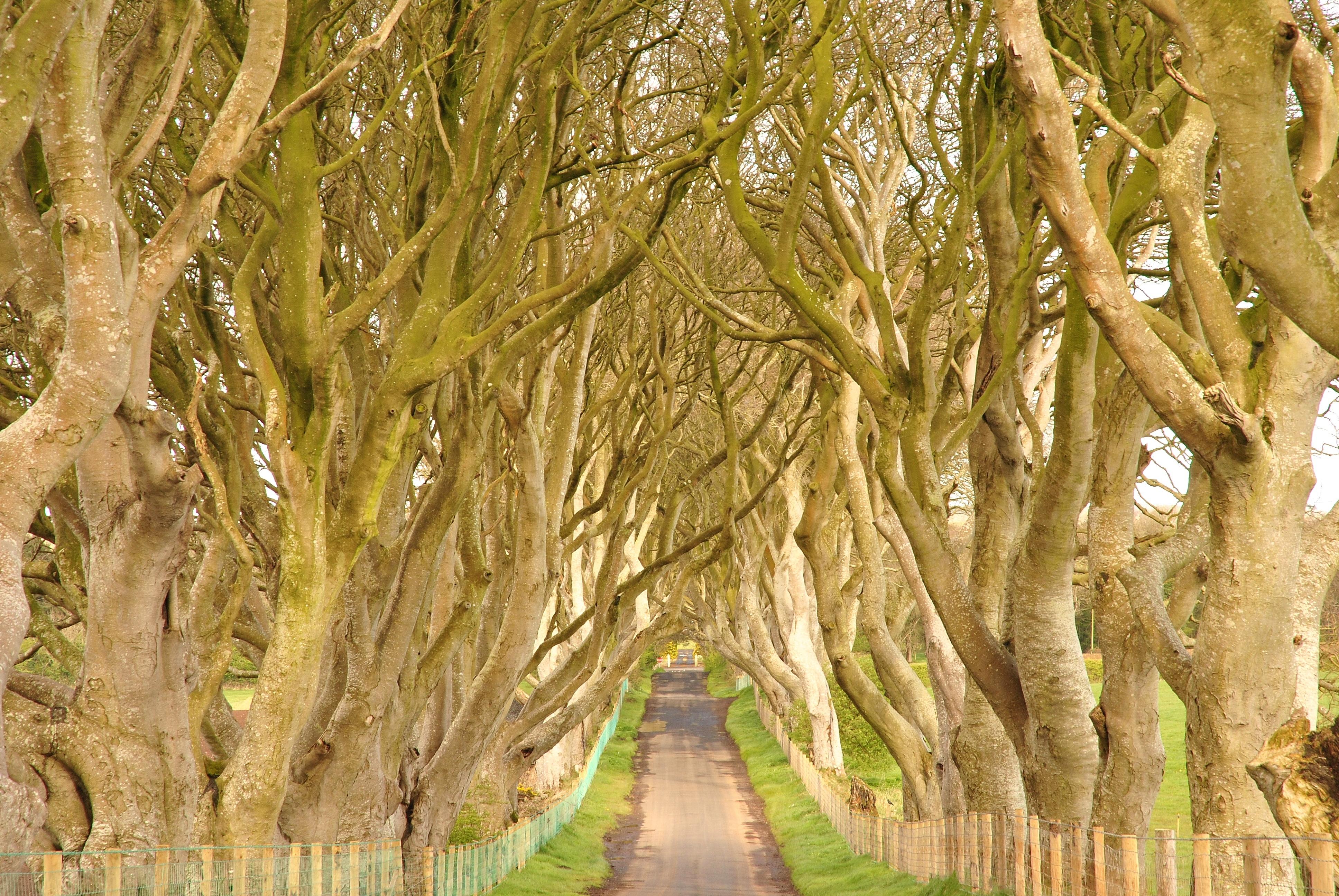Dark_Hedges,_County_Antrim,_Northern_Ireland_(6961336542)_(2)