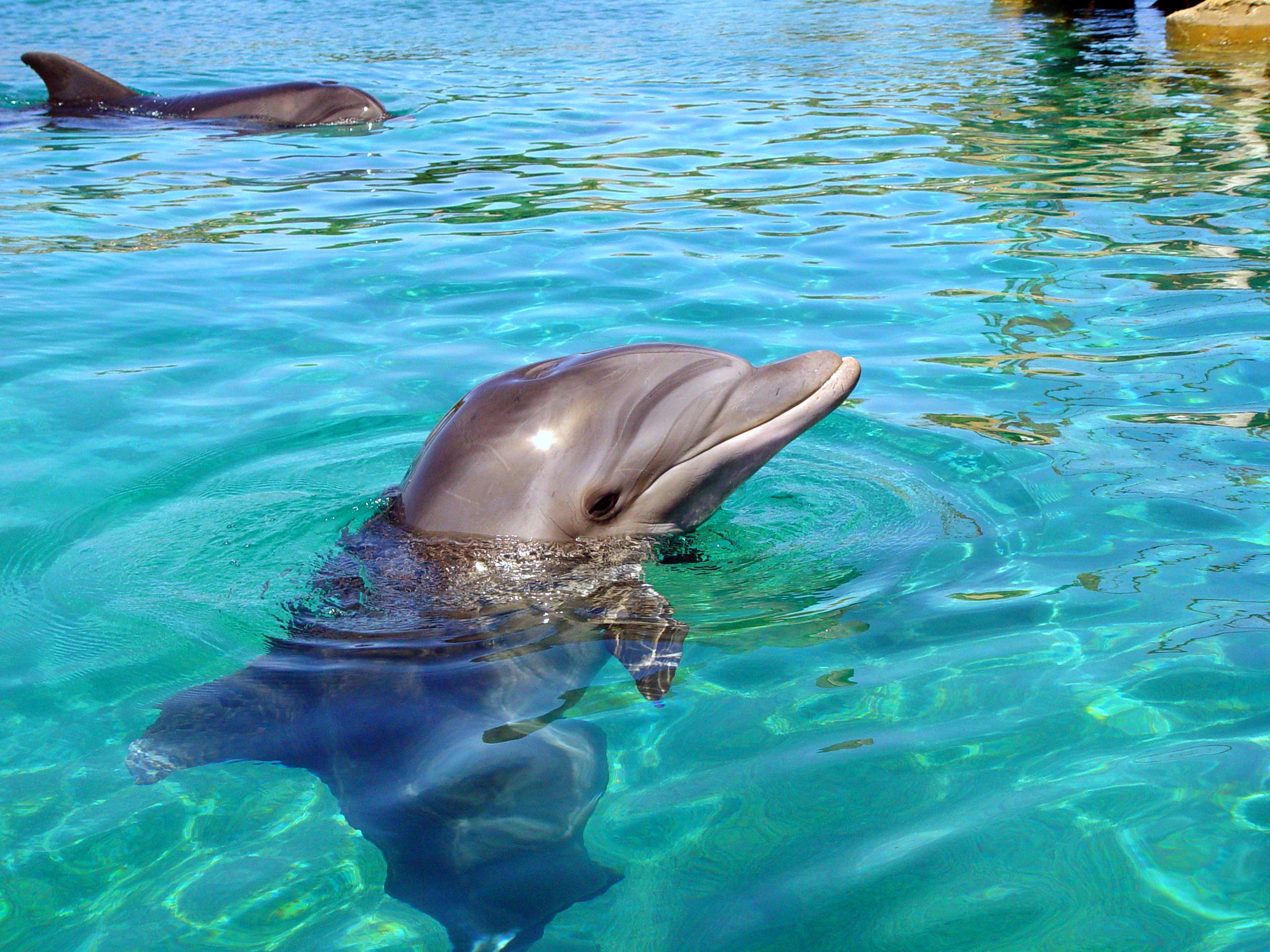 PikiWiki_Israel_15217_Dolphin