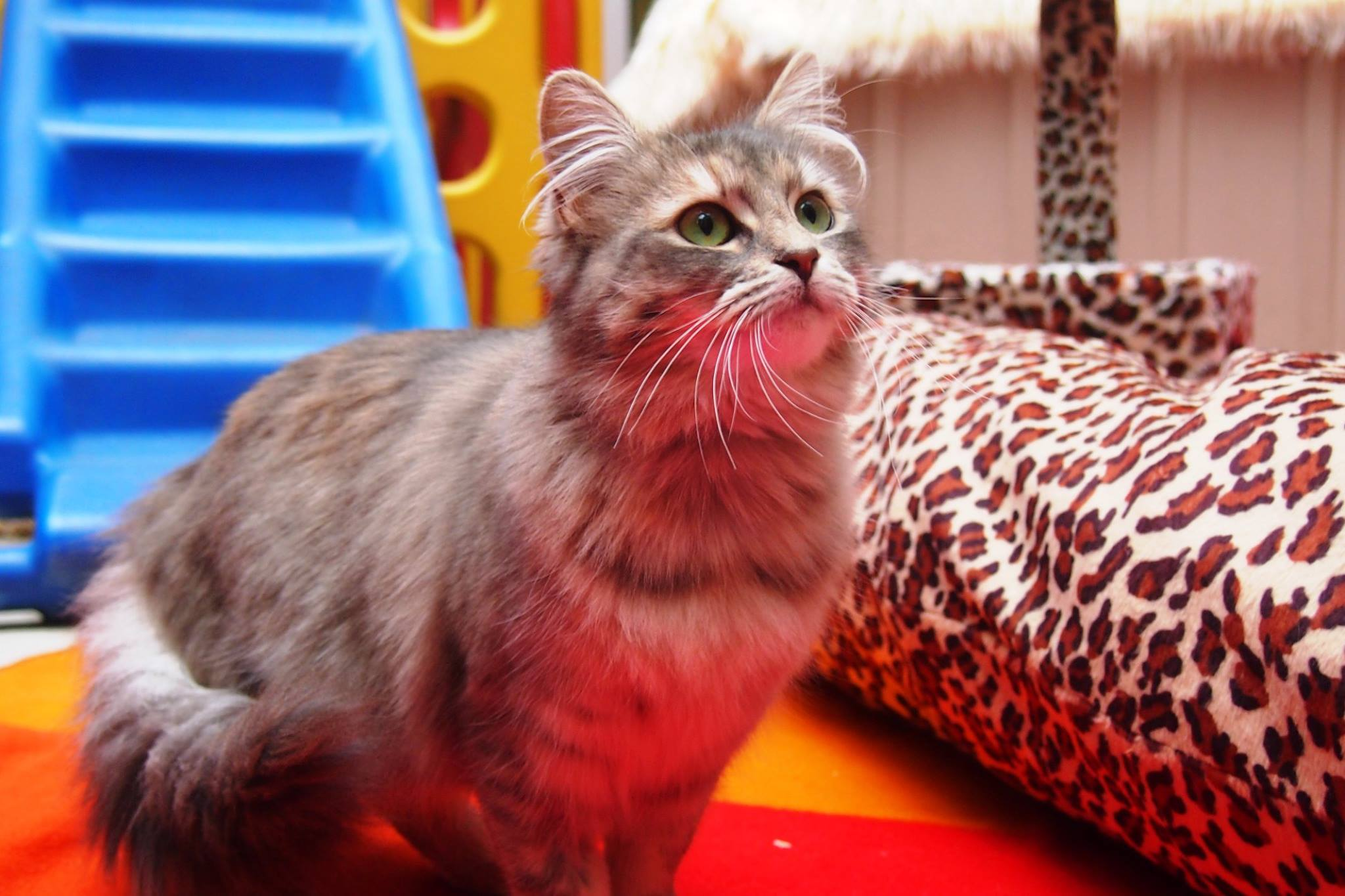 A throwback to Chatswood's first adopted kitty, Irene