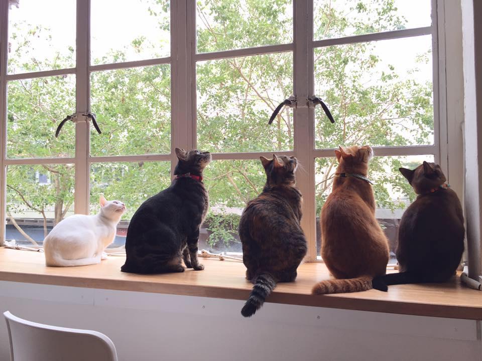 Bird-watching, perhaps