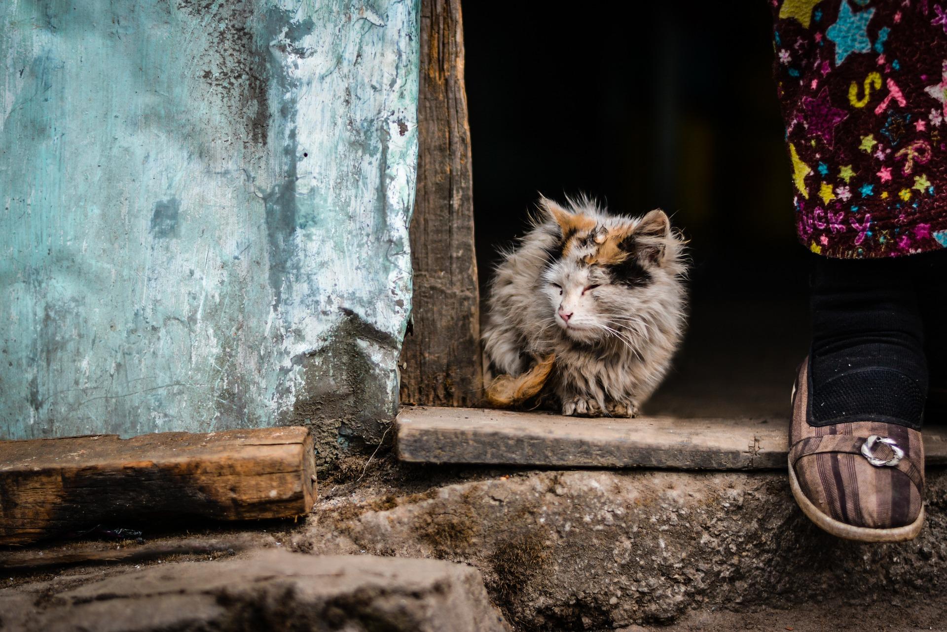 cat-1209904_1920
