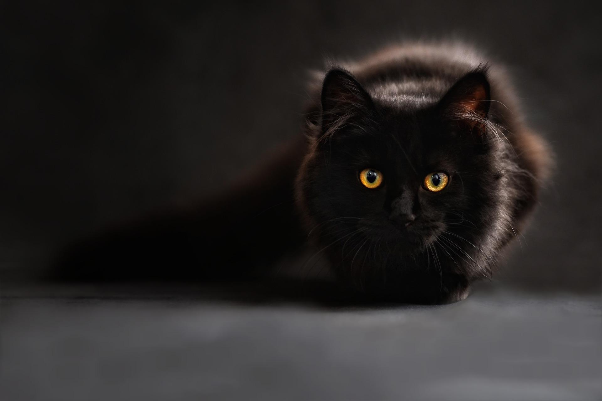 cat-694730_1920