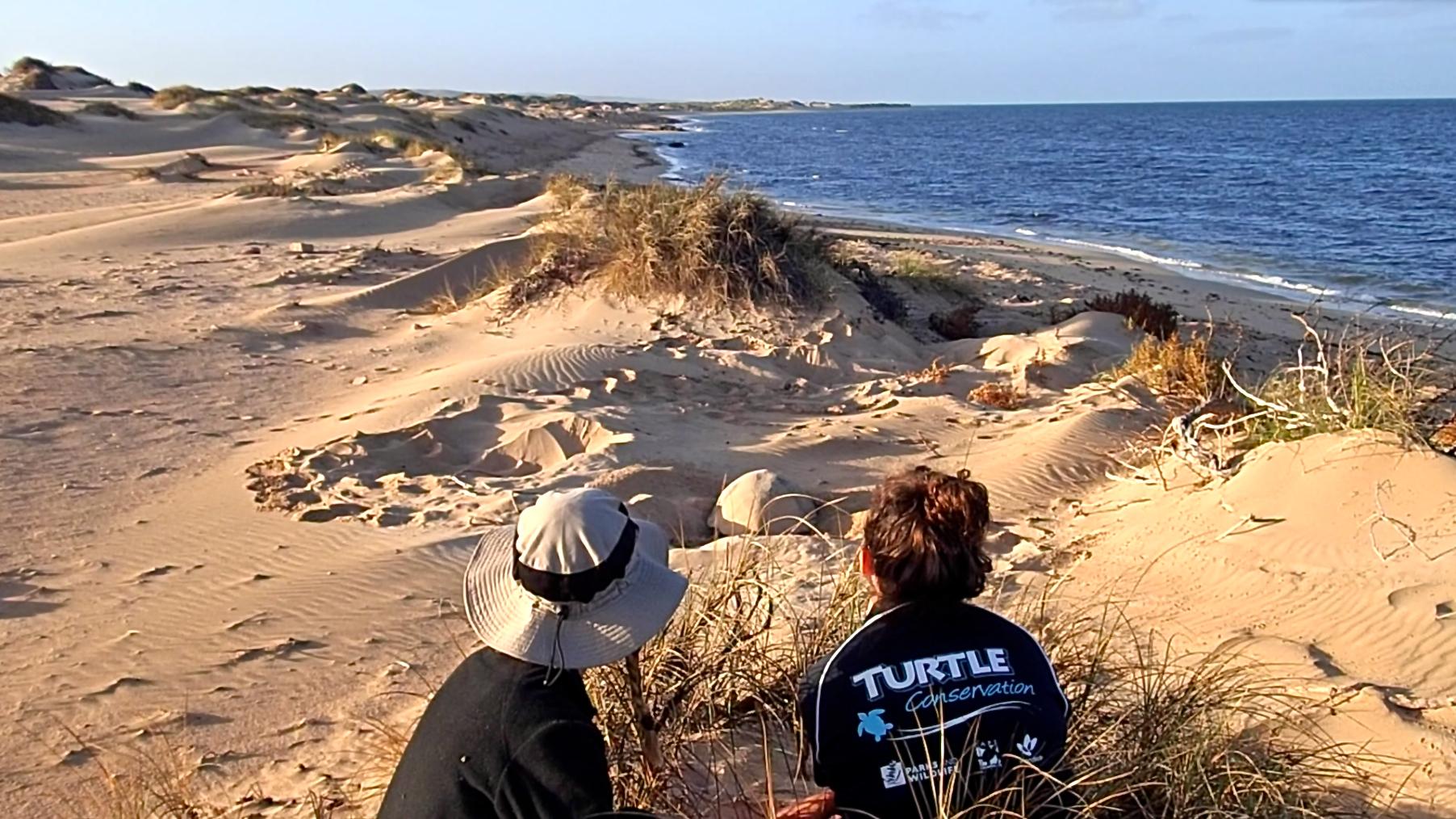 Ningaloo Turtle Monitoring Program